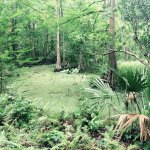 Foto di Wildlife Gardens Bed and Breakfast and Swamp Tours