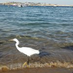 Photo de Helnan Marina Sharm