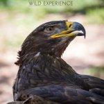 Messinia Wild Experience