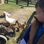 Newham Grange Country Farm
