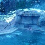 Photo de Appalaches Lodge-Spa-Villegiature