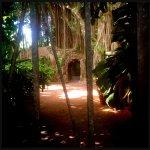 Peeking through the gate into the courtyard where the Strangler fig resides