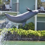Dolphin Quest at Kahala