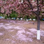 Acres of blossoms