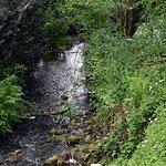 Stream down by the pond.