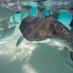 Sting rays swim around us