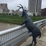 Great deer statues along the greenway at Genoa park. Deer imitating humans. So funny.
