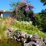 Fuente preciosa con peces koi, flores y mas flores, hermosos jardines.