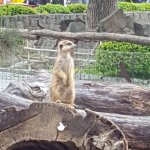 Safari Park Dvur Kralove Photo