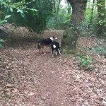 beacon hill dog walk
