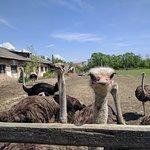 Khust Ostrich Farm