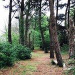 Une promenade en forêt?