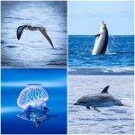 Define und Wale, dazu Meeresvögel und Quallen. Mehr geht nicht!