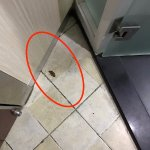Cockroaches in the room