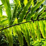 Cairns Botanical Garden