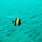 Moorfish