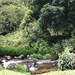 Photo de Trogon Lodge San Gerardo de Dota