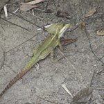 Lots of lizards about the property