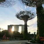 Photo of SuperTree by IndoChine