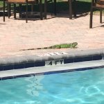 Great hotel-clean, friendly, beautiful landscaping. Loved the huge iguanas poolside. A little no