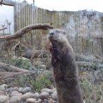 Otter at Tilgate Nature Centre.