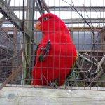 Parrot at Tilgate Nature Centre.