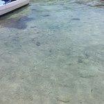Needlefish in gin clear water...