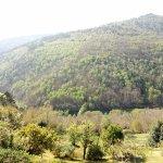 Photo of El Bosque de las Vinas