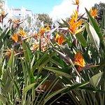 Photo of Marbella Playa Hotel