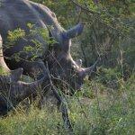 Rhino were plentiful