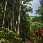 Photo de Hawaii Tropical Botanical Garden