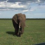 elefante anziano