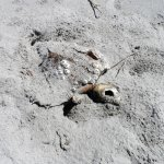 Dead sea turtle on the beach