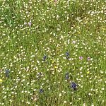 Petrified forest meadow with wild flowers