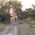 Photo de Wilderness Safaris Kings Pool Camp