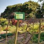 Lake Merrit Trial Garden