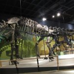 Photo of Cleveland Museum of Natural History
