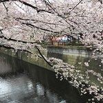 Photo of Meguro River