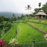 Puri Lumbung Cottages Foto
