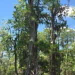 Foto di Cajun Country Swamp Tours
