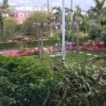 Foto de Royal Palms Hotel