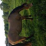 Photo de Southern Cross Ranch