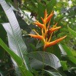 Small lizard on flower at botanical gardens