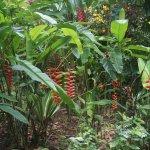 Beautiful plants at botanical gardens