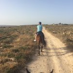 View from our sunset horse ride with golden bay horse riding