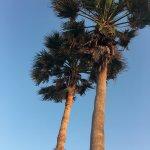 Photo de Super 8 South Padre Island