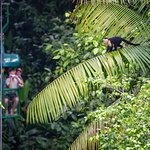 Rainforest Adventures Costa Rica. Real Nature, Real Fun.