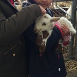 The Spring Lambing Experience- RSPB - Credit PR