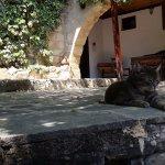 Villa courtyard, and pet cat