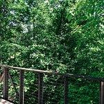 Fort Worth botanical gardens walking trail.